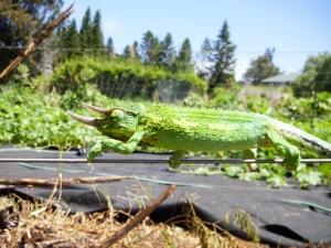 A teenaged Jackson joins the elite pest control ranks this week