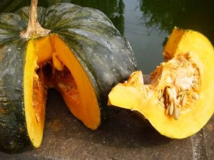 My newly created organic squash (very non-gmo)