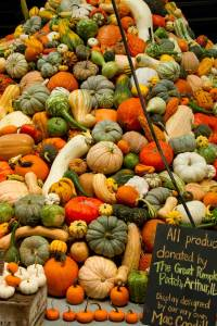 Great-pumpkin-patch-Expo-2011