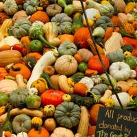 Dreaming of the National Heirloom Expo