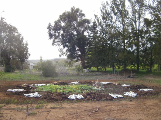 The upcycled blocks of basalt and coconut coir from a neighbor farm ring the irrigation circle.