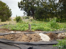 Coral sand, horse manure, mulch, ironwood needles, fish, and coconut coir make the addition.