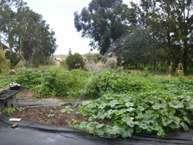 intensive plantings of summer