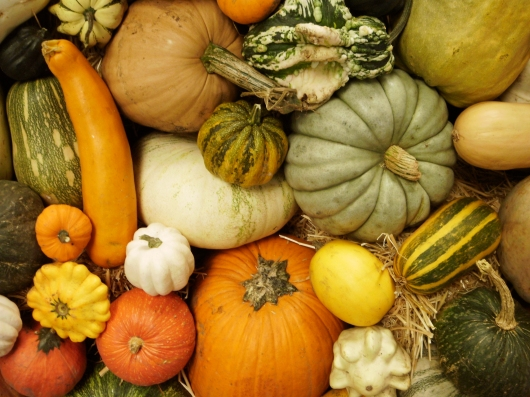 Heirloom Expo squash displays