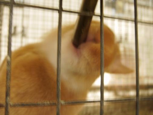 poetry in the quiet bunny
