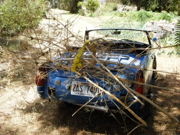 The Mg hauling bamboo trellis materials