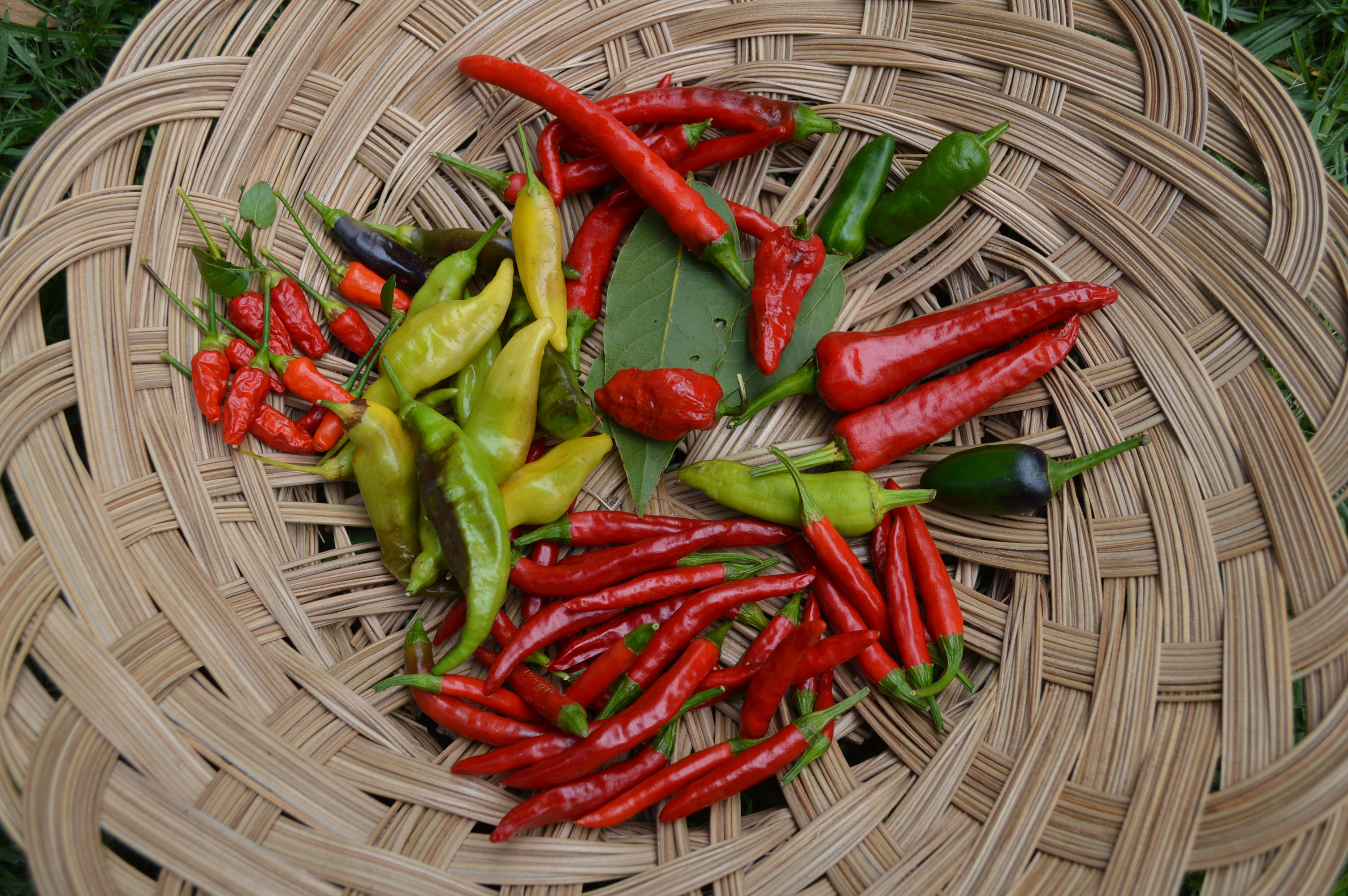 Spoonable Heirloom Chili Pepper Oil – Squash and Awe