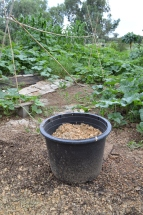 an individual squash planter