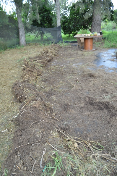 old vines and grass rolled and used as mulch