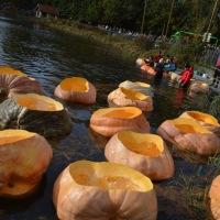 Paddling Pumpkins in Kasterlee, Belgium